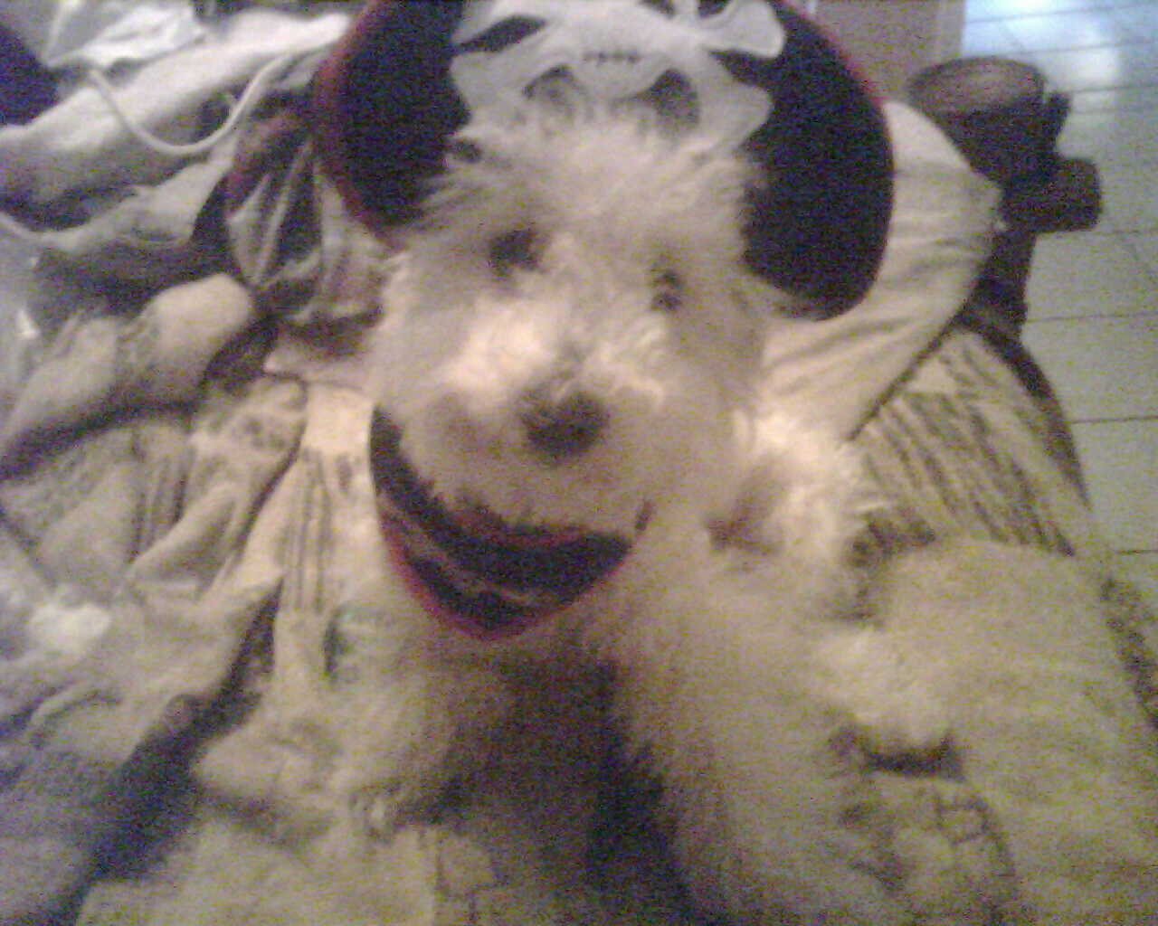 Scooter in a Pirate Costume